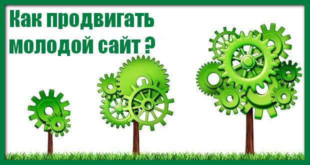 Продвижение молодого сайта в Алматы